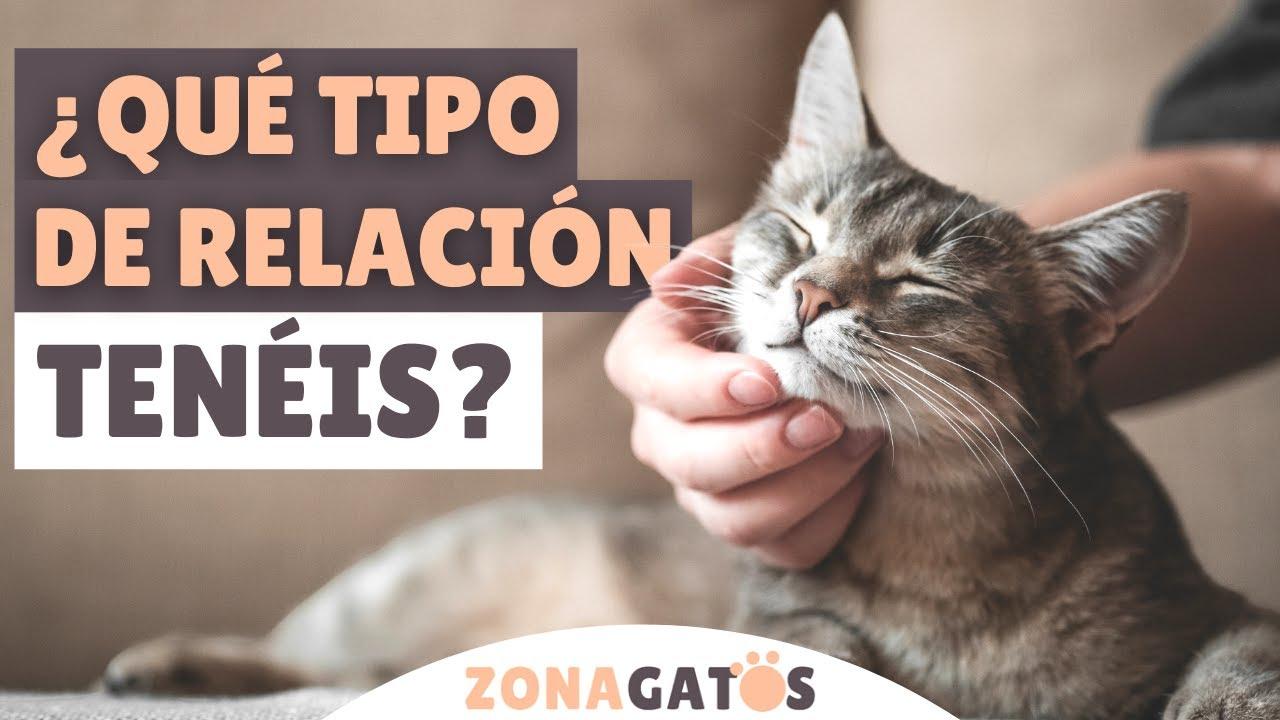 ¿Qué tipo de RELACIÓN tiene tu gato CONTIGO? ➡️ Descubre los 5 TIPOS