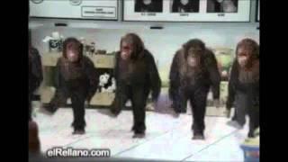 bad monkeys - ape house [WoNKed Records]