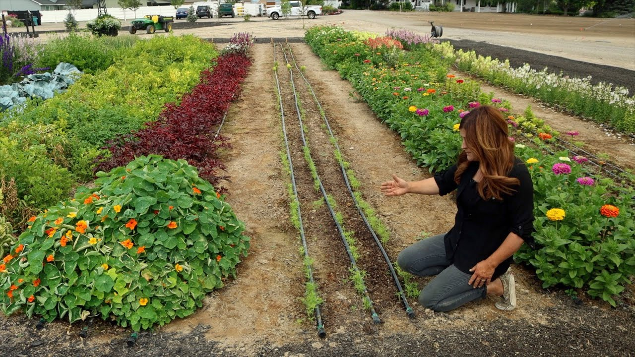July Cut Flower Garden Tour! 🌸✂️💚 // Garden Answer