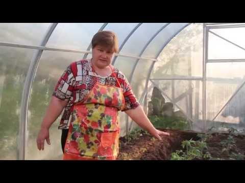 Как правильно растить помидоры в теплице видео