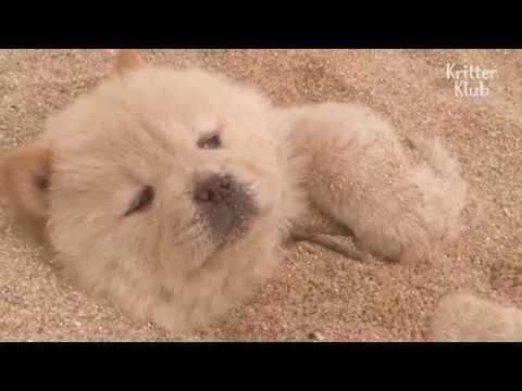 Puppies Detox Their Body In A Hot Sand Bath | Kritter Klub