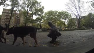 Leonidas Vlog#2 - Dog Training Queens Ny- German Shepherd Helps In Training Leonidas