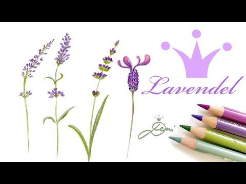💜🌿Lavendel zeichnen lernen