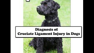 Cruciate Ligament Rupture in Dogs: Diagnosis