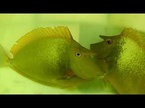 Marine Fish Exporter - Sri Lanka