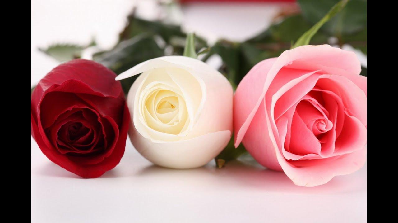 Qué Significa Soñar Con Rosas Sueño Significado Youtube