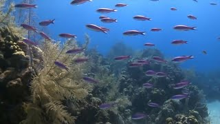 Hawaii considers ban on certain sunscreens to protect coral reefs