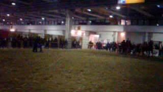 cavalli  TPR agricoli italiani alla fiera cavalli di verona 2009.MPG