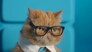「2画面スマホって何ができるの?」→「猫動画見ながら仕事ができます。」