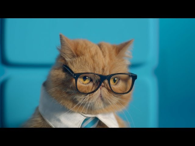ZTE Axon M: Business Cat