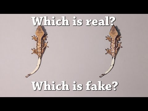 Fun Test: Which is real? Vol 3