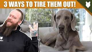 3 Tips To Tire Out Your WEIMARANER Puppy