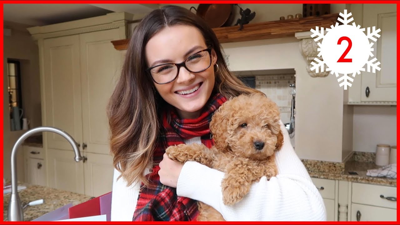 Download MEET OUR PUPPY! | Vlogmas #2