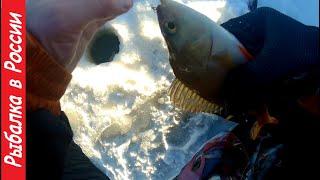 Ловля окуня на зимнюю блесну Озеро Ильмень