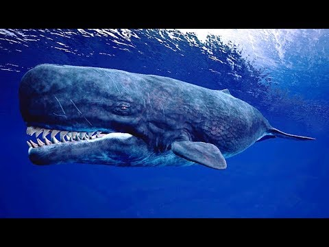 prehistoric whale Leviathan