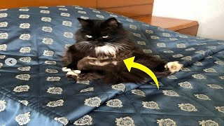 Pregnant Cat Gives Birth, But Vets Realize Those Were Not Kittens