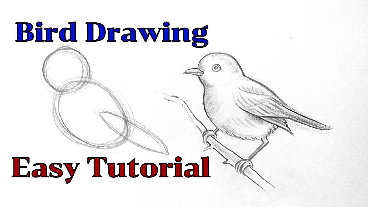 How to draw a bird drawing easy step by step Basic drawing lessons for  beginners pencil drawings