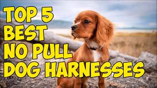 Top 5 Best No Pull Dog Harnesses in 2018