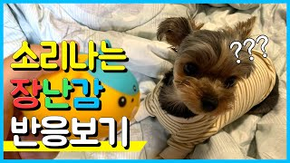Yorkshire Terrier Vlog #18.소리나…