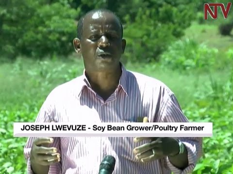 On The Farm: Growing soya for sale and animal feeds