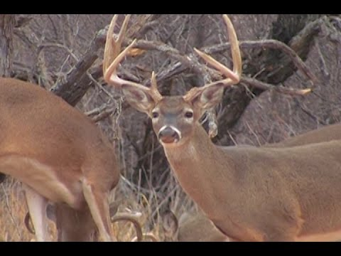 West Texas Deer Hunting - The Management Advantage