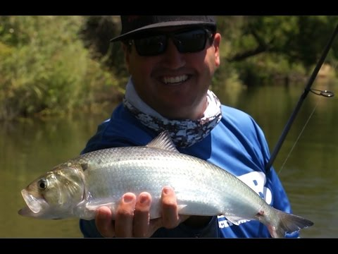 Bank Fishing for Shad, American River!