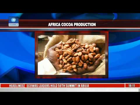 Africa Cocoa Production: Stakeholders Seek Solutions To Declining Revenues
