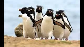 PINGUIN DANCE-VALLJA E PINGUINIT
