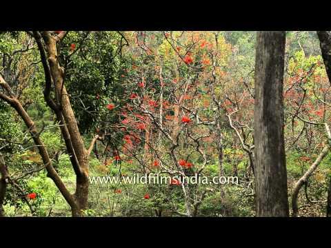 Dense green forest of Rajaji National Park