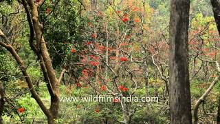 Dense green forest of Rajaji National Park