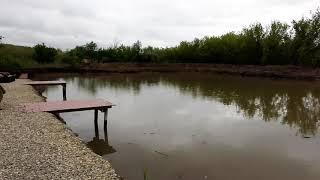 Платная рыбалка пруд Чёрные камни 02 06 20г Запуск карпа