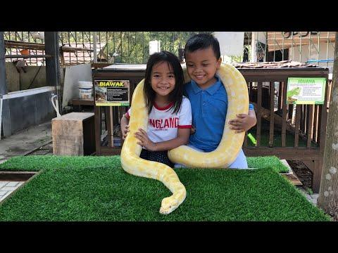 Zara Cute foto sama Ular Phyton   Yuk Mengenal Hewan Melata ULAR
