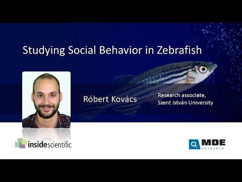 Studying Social Behavior In Zebrafish