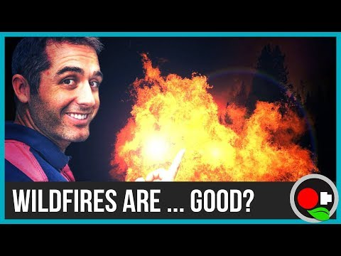 Why Fire is Good (But You Still Shouldn't Start a Forest Fire)
