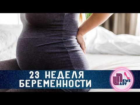 23 Двадцать третья неделя
