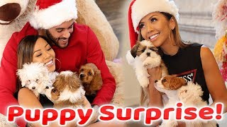 WE GOT PUPPIES IN PALMS SPRINGS WITH GUESS! ft. Don Benjamin | Liane V