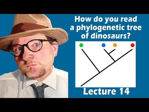How do you read a phylogenetic tree of dinosaurs?