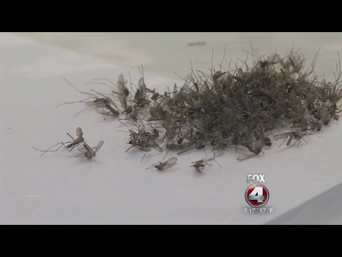 Miami Beach cleared of Zika
