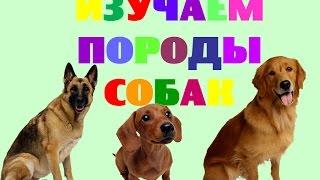 Изучаем породы собак. Названия пород собак. Развивающее видео для малышей
