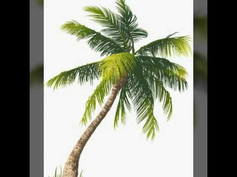 Dessiner un palmier youtube - Dessin palmier ...