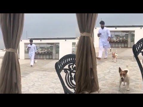 Ram Charan goes for a walk with his cute dogs || #RamCharan || Indiaglitz Telugu