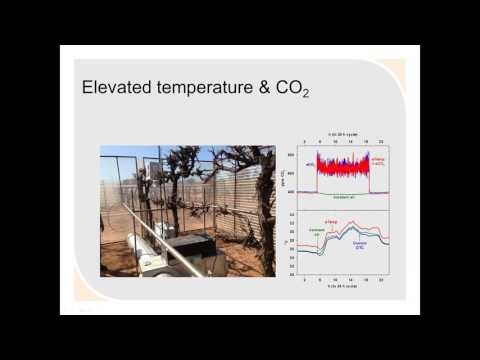 Effect of elevated CO2 and temperature on grapevine physiology (AWRI Webinar recording)
