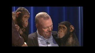 Die Affen sind los! - TV total