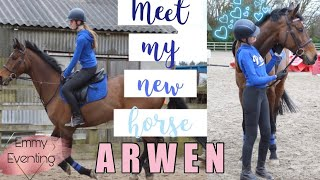 Meet My New Horse ARWEN *officially* | Emmy Eventing