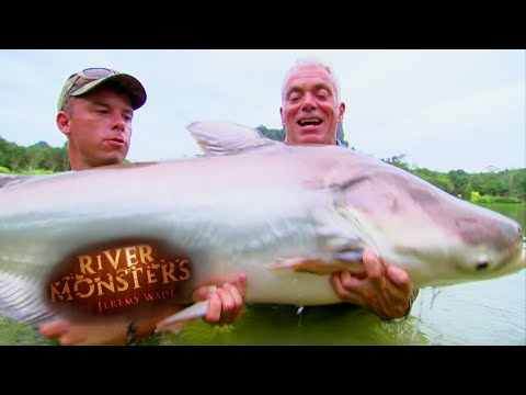 Catching A Mekong Giant Catfish - River Monsters