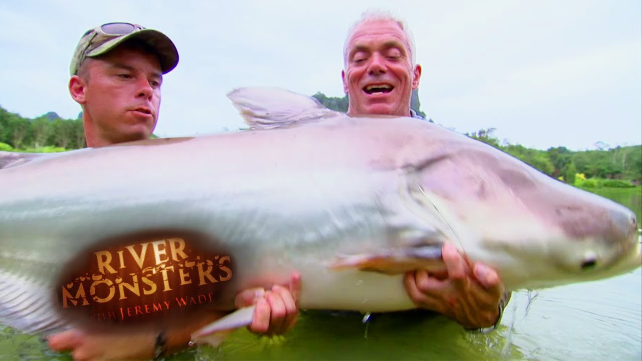 catching a mekong giant catfish river monsters youtube