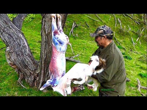 Hunting deer and how to skin it kiwi style youtube for Skin it fish skinner