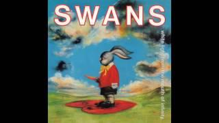 swans blind