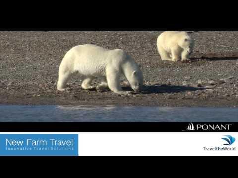VIDEO Arctic Polar Bears Newfarm