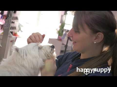 HappyPuppy, Salon De Toilettage Pour Chiens, Chats | Bruxelles (Forest)